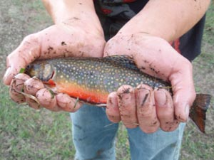 Trout cradled in hands.
